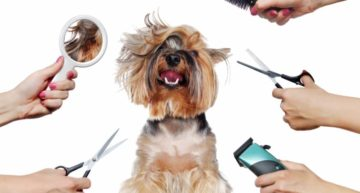 Dog Grooming Business Plan Template [2021 Updated]